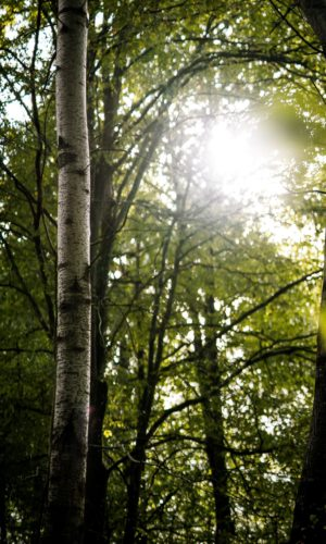 image arbre ecotree
