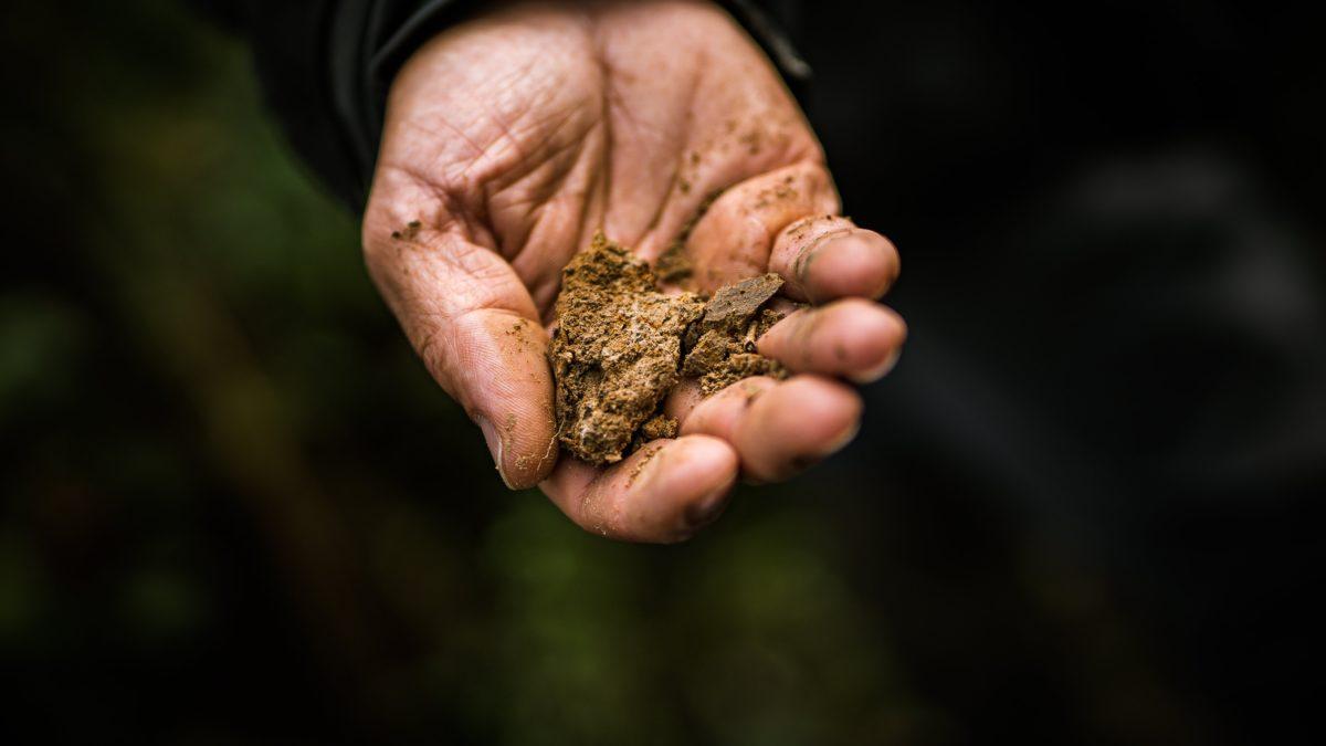 Partenariat entre EcoTree et Würth : un arbre planté pour un contrat ORSYclage signé