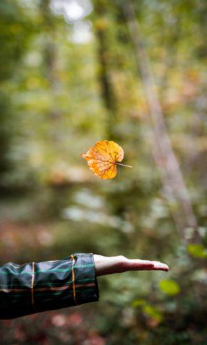 photo arbre feuille main